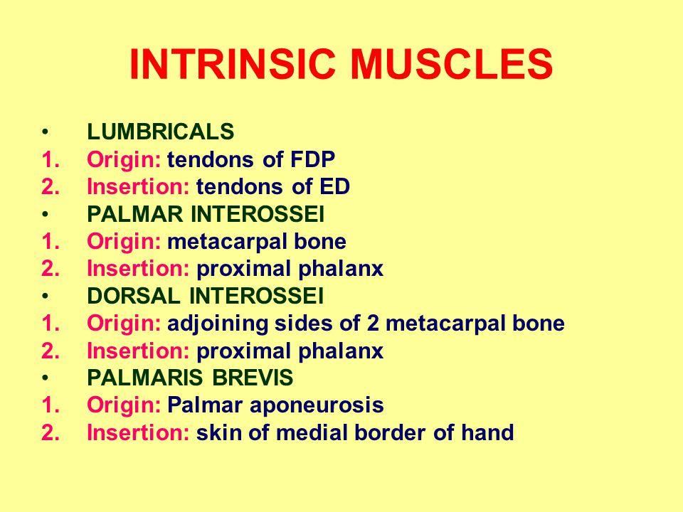 INTRINSIC MUSCLES LUMBRICALS Origin: tendons of FDP