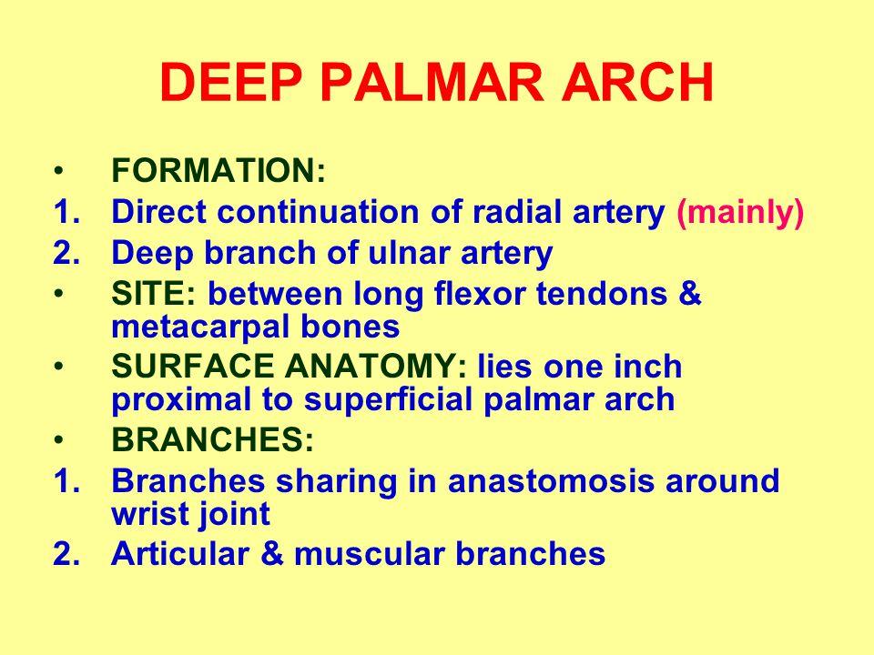 DEEP PALMAR ARCH FORMATION: