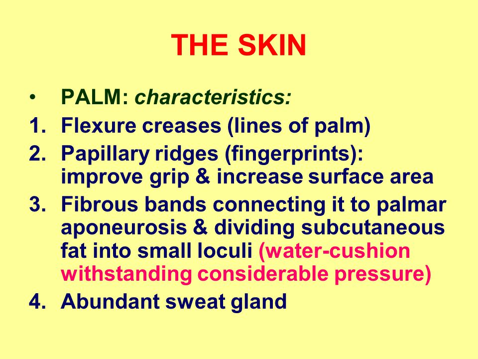 THE SKIN PALM: characteristics: Flexure creases (lines of palm)
