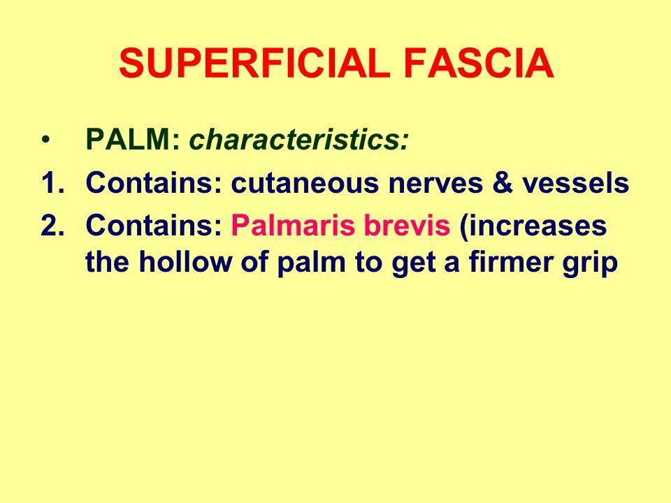 SUPERFICIAL FASCIA PALM: characteristics: