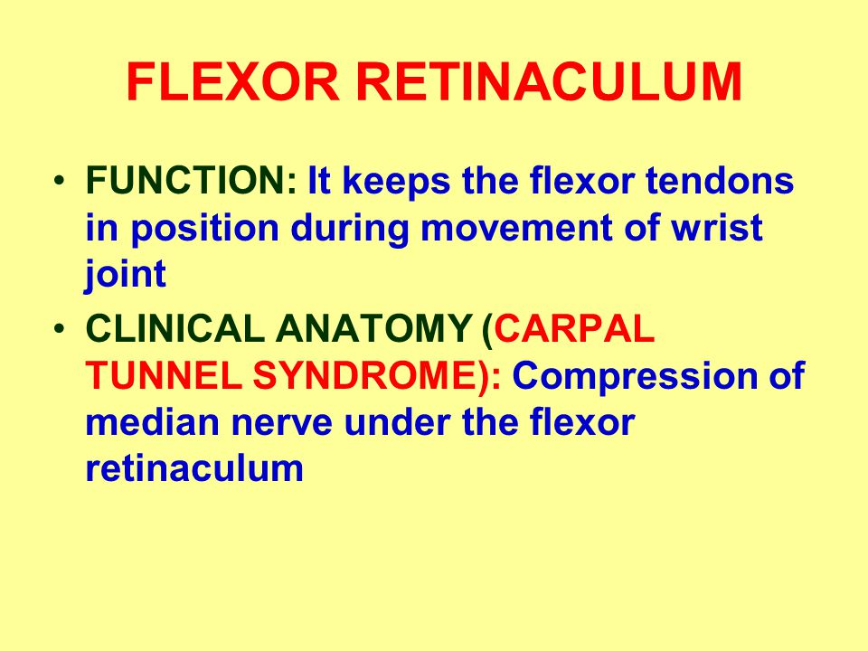 FLEXOR RETINACULUM FUNCTION: It keeps the flexor tendons in position during movement of wrist joint.