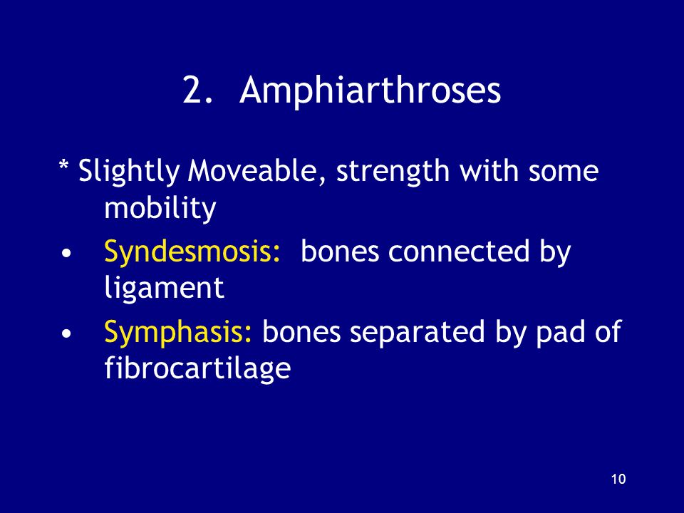 2. Amphiarthroses * Slightly Moveable, strength with some mobility
