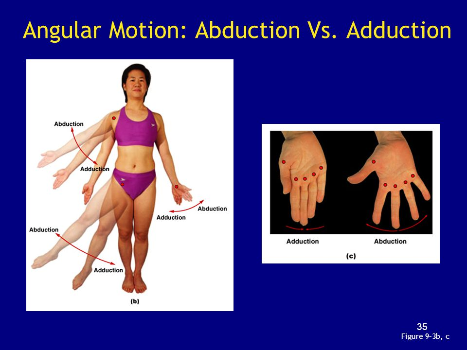 Angular Motion: Abduction Vs. Adduction