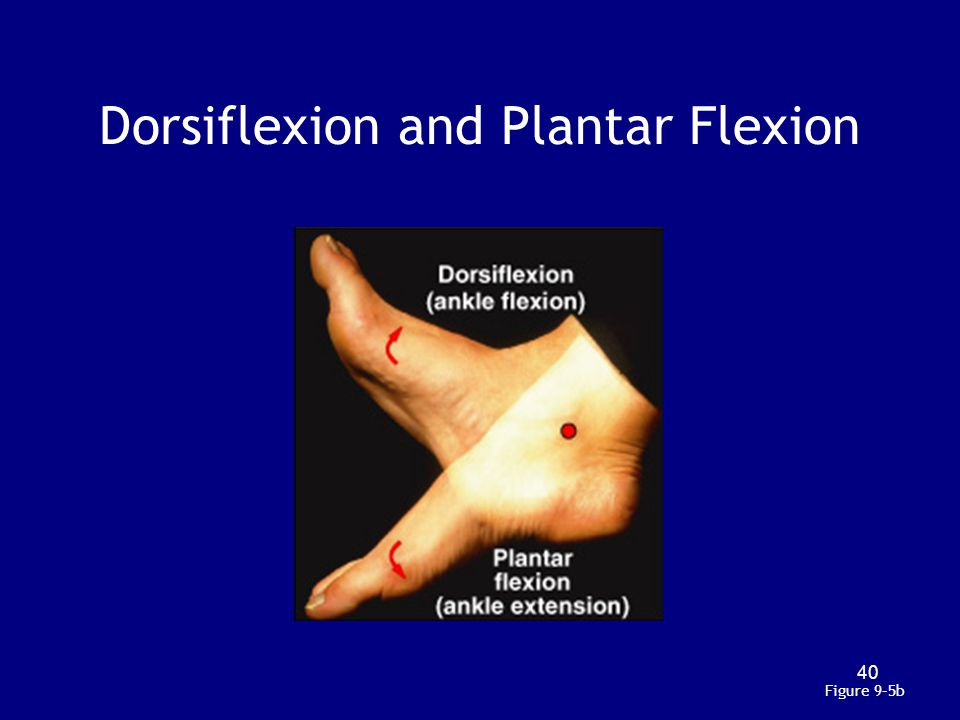 Dorsiflexion and Plantar Flexion