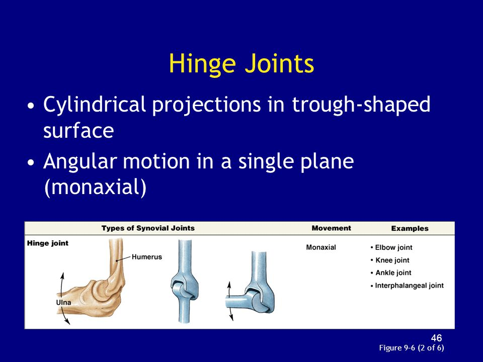 Hinge Joints Cylindrical projections in trough-shaped surface