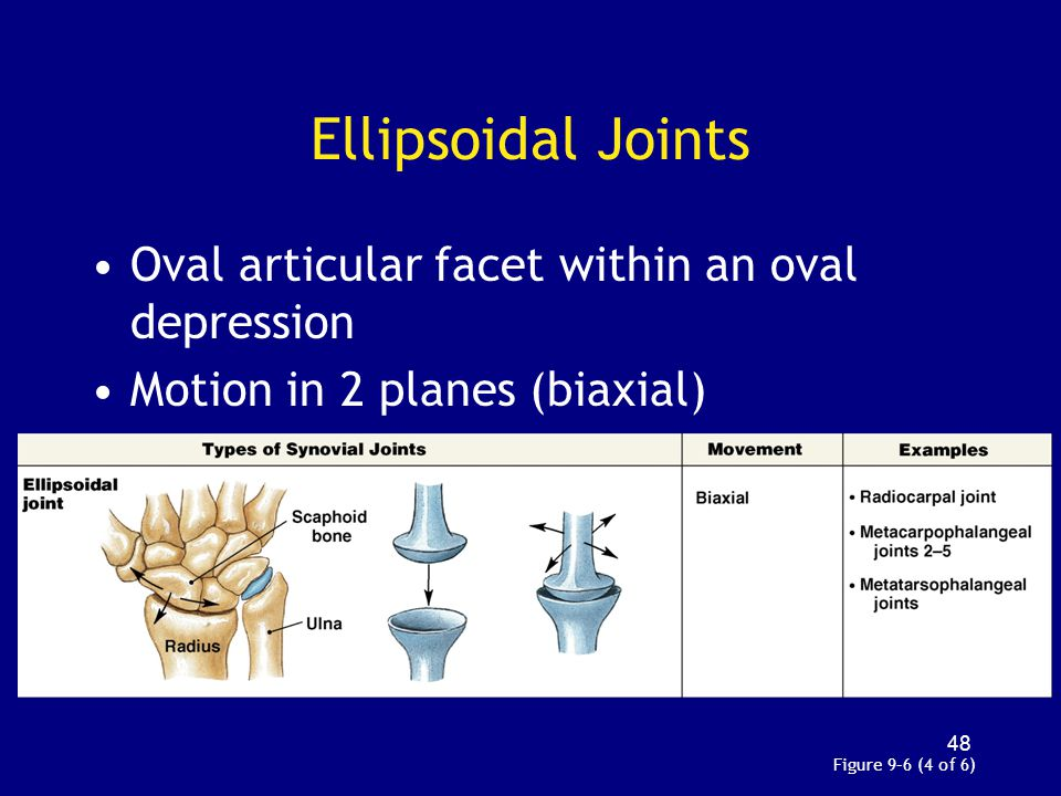 Ellipsoidal Joints Oval articular facet within an oval depression