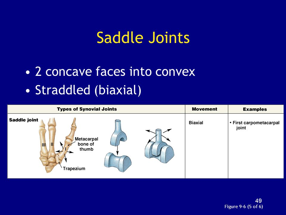 Saddle Joints 2 concave faces into convex Straddled (biaxial)