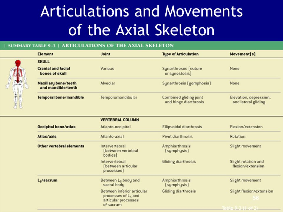 Articulations and Movements of the Axial Skeleton