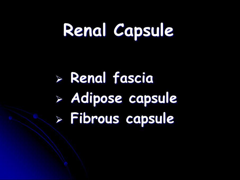 Renal Capsule Renal fascia Adipose capsule Fibrous capsule