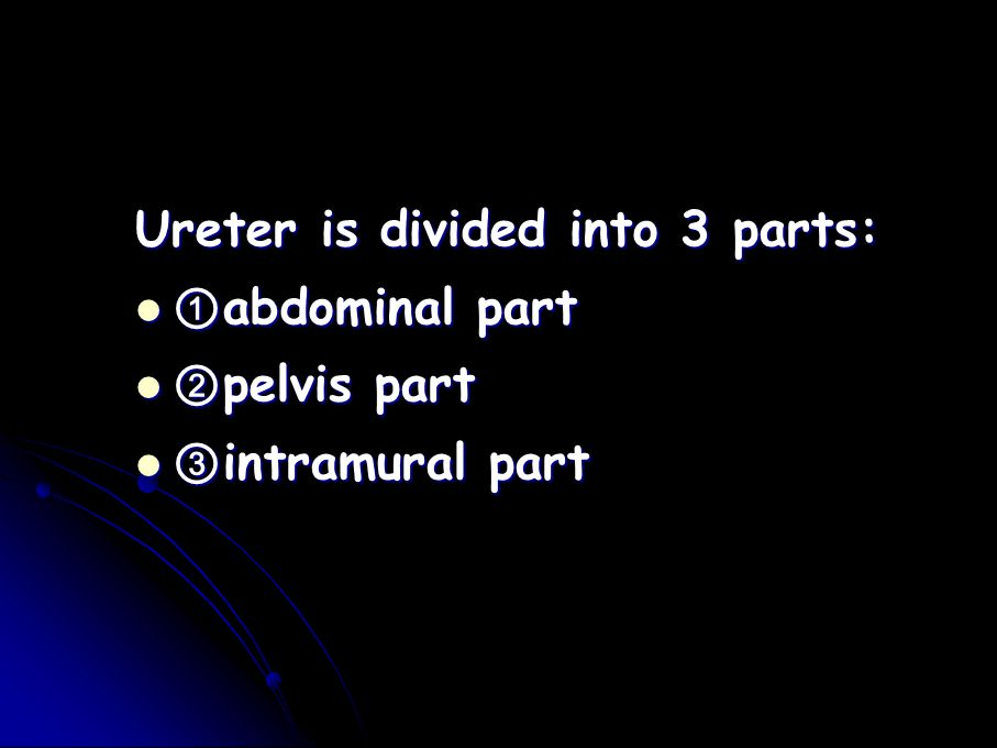 Ureter is divided into 3 parts: