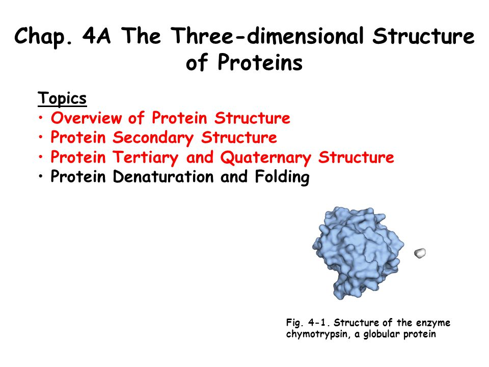 Chap. 4A The Three-dimensional Structure of Proteins