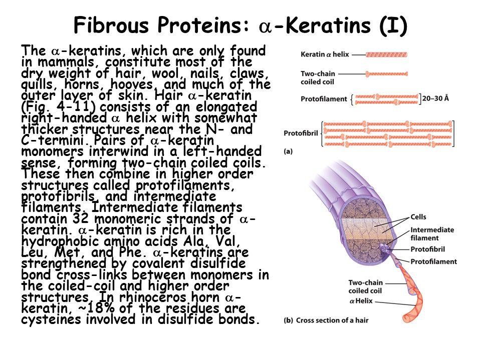 Fibrous Proteins: -Keratins (I)