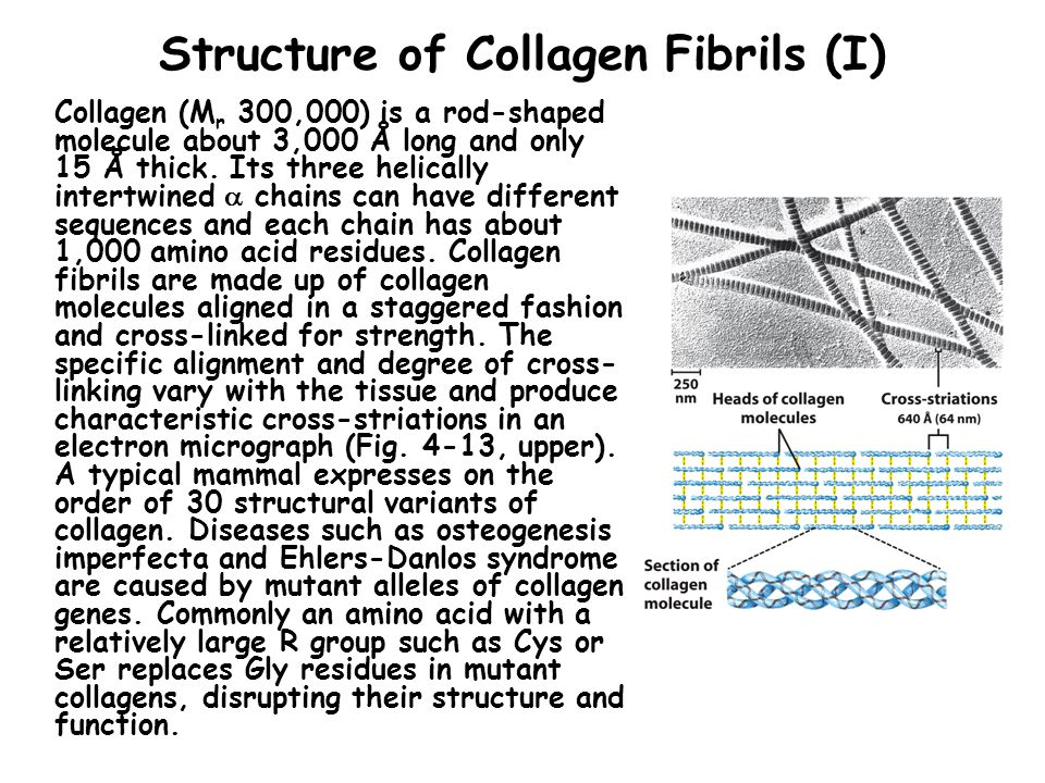 Structure of Collagen Fibrils (I)