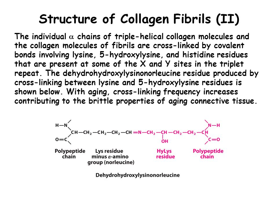 Structure of Collagen Fibrils (II)