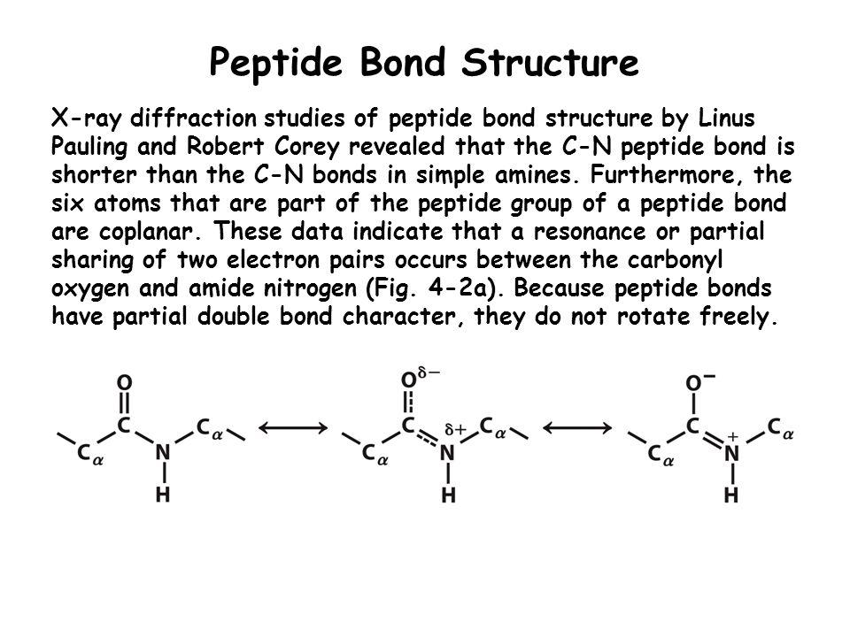 Peptide Bond Structure