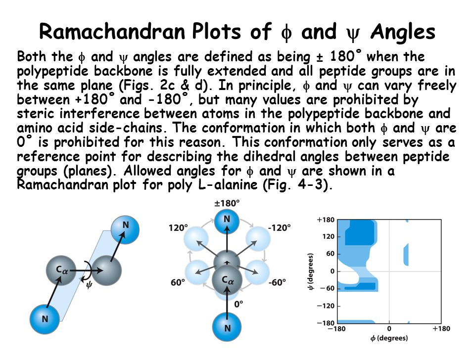 Ramachandran Plots of  and  Angles