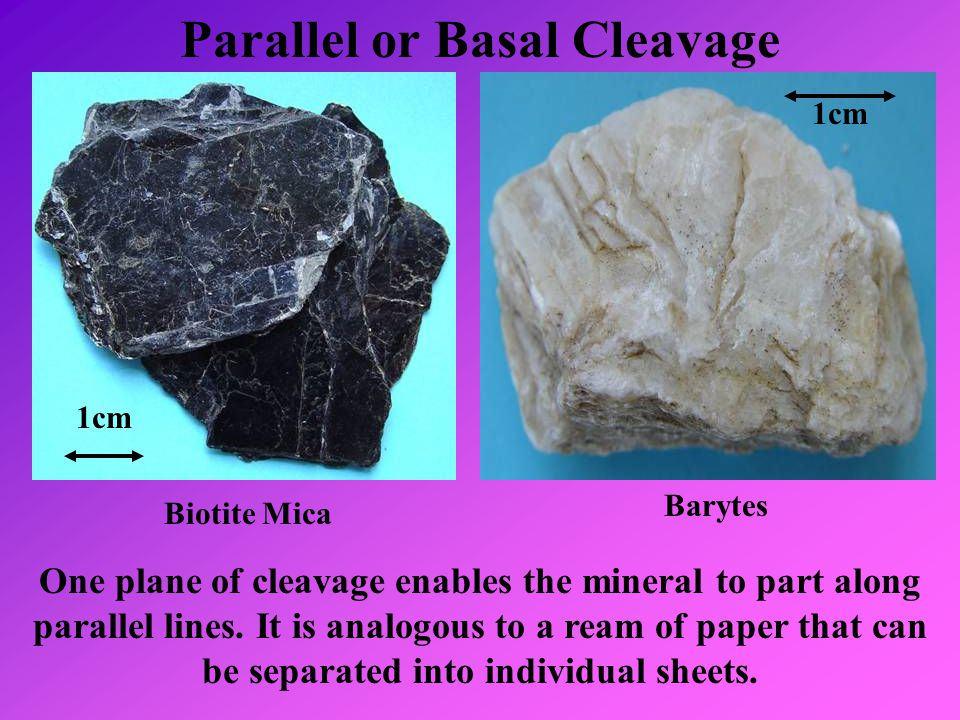 Parallel or Basal Cleavage