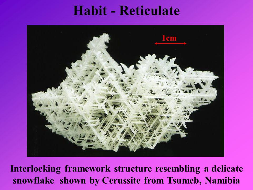 Habit - Reticulate 1cm.
