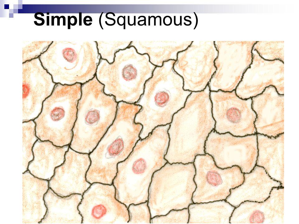 Simple (Squamous)