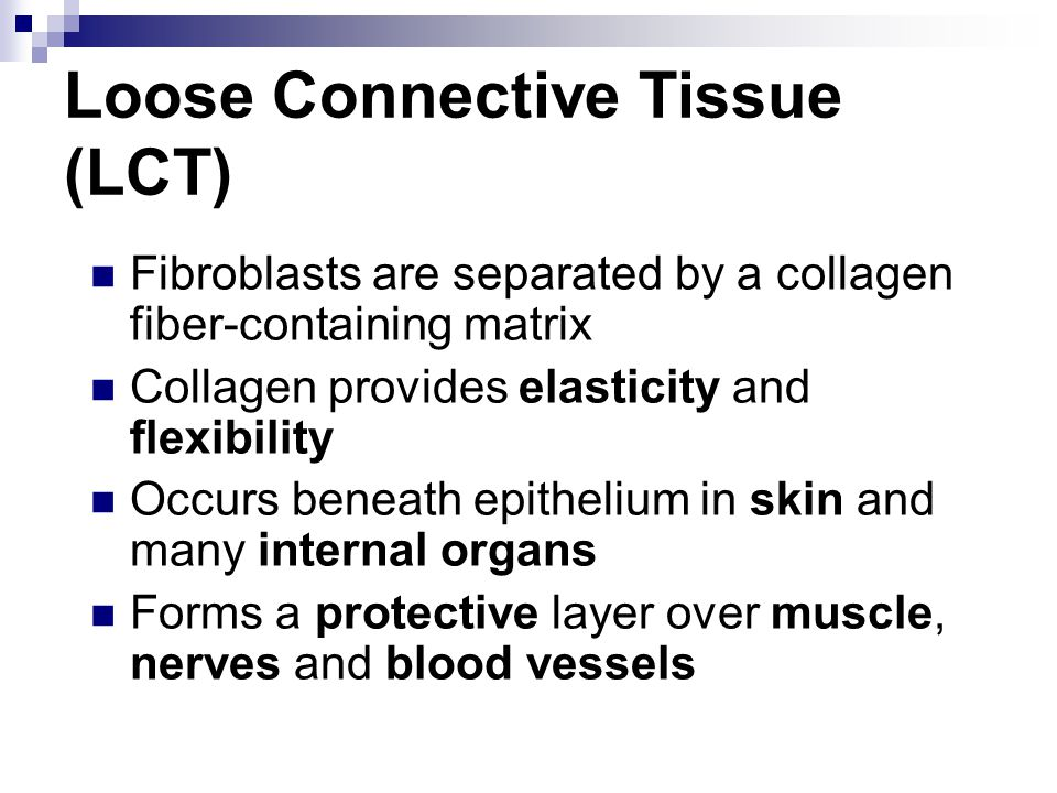 Loose Connective Tissue (LCT)