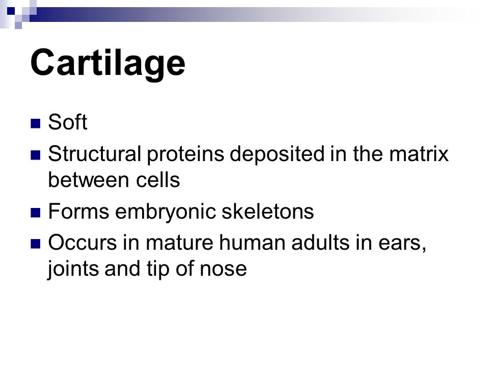Cartilage Soft. Structural proteins deposited in the matrix between cells. Forms embryonic skeletons.