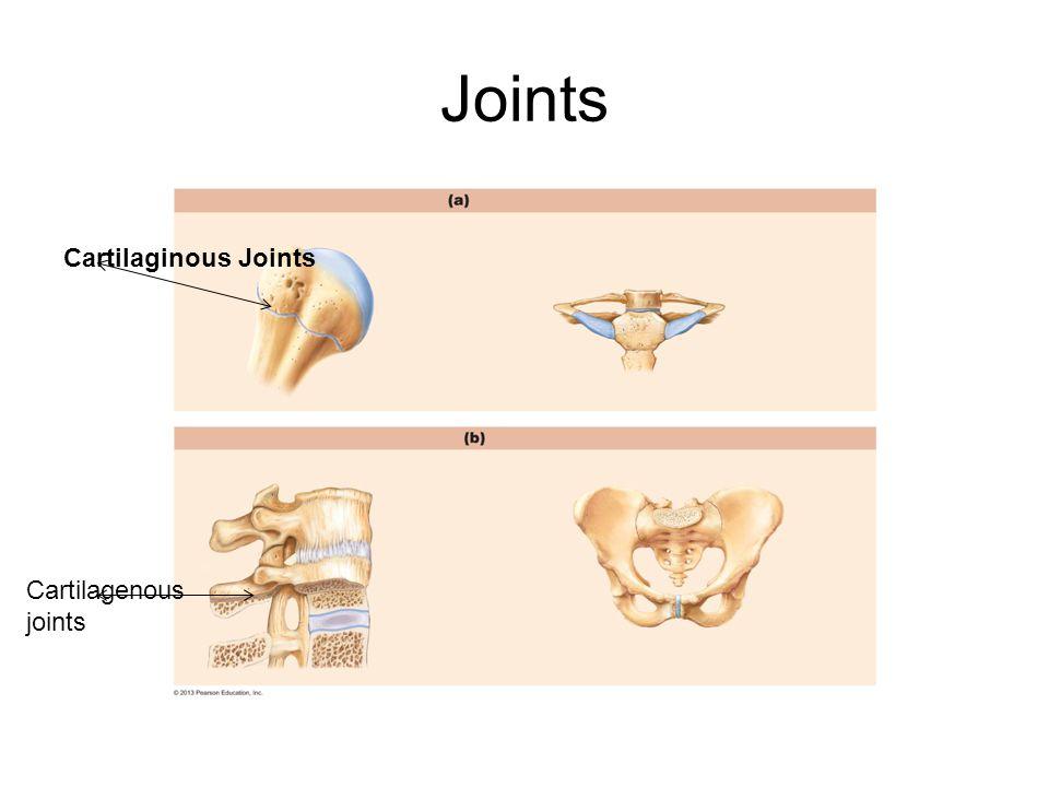 Joints Cartilaginous Joints Cartilagenous joints