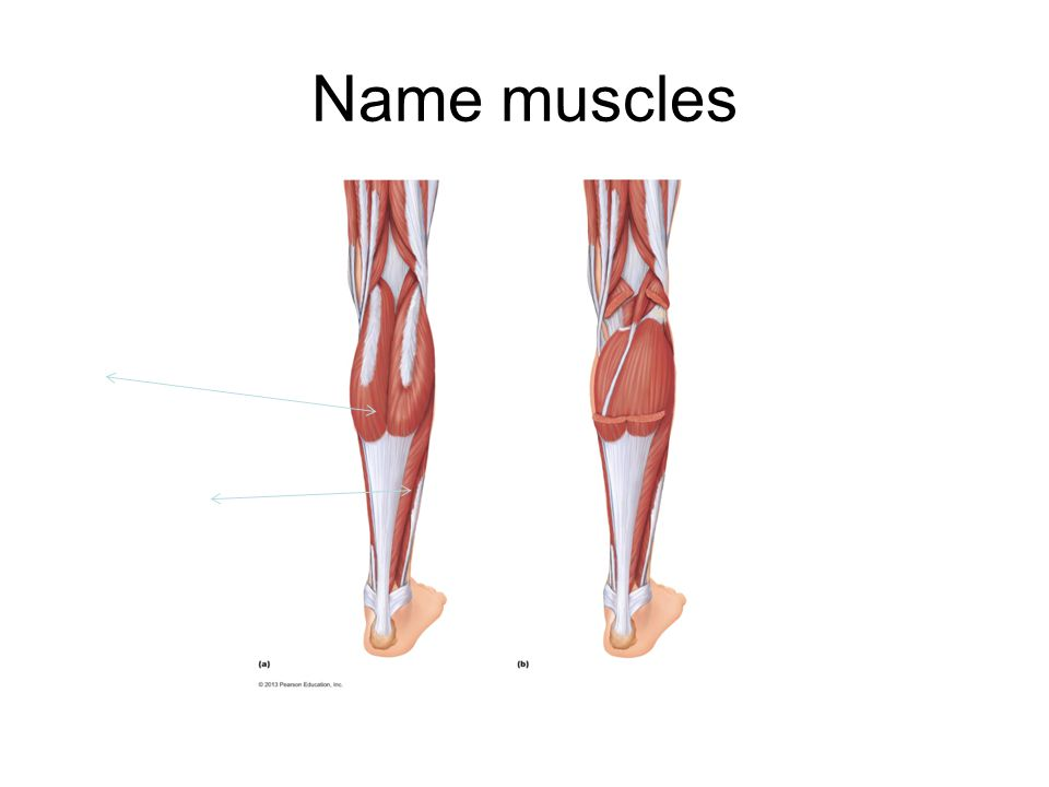 Name muscles