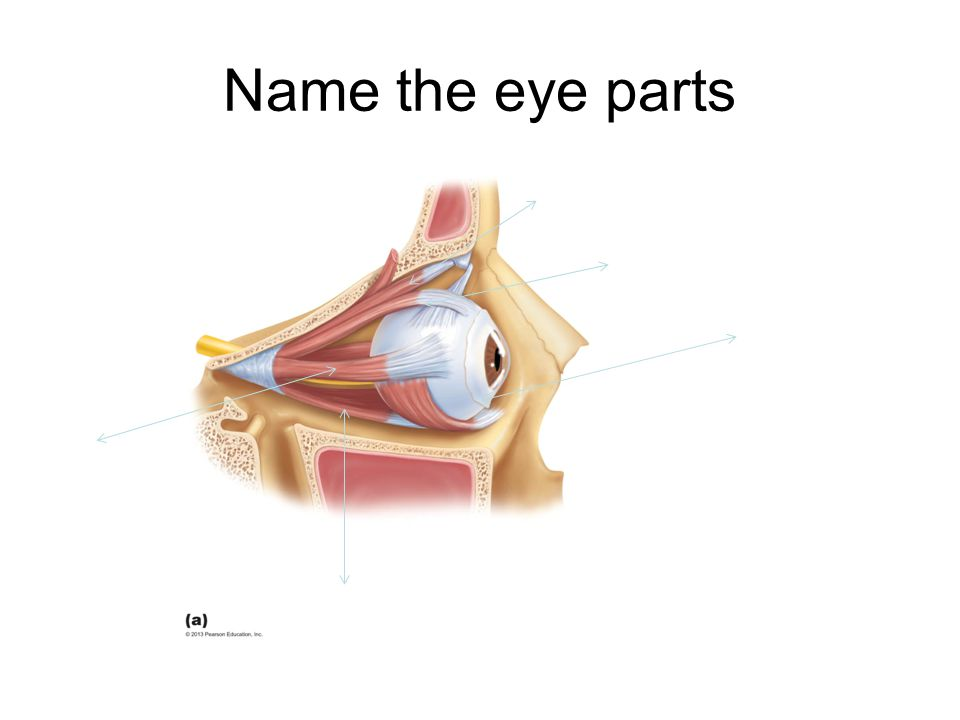 Name the eye parts