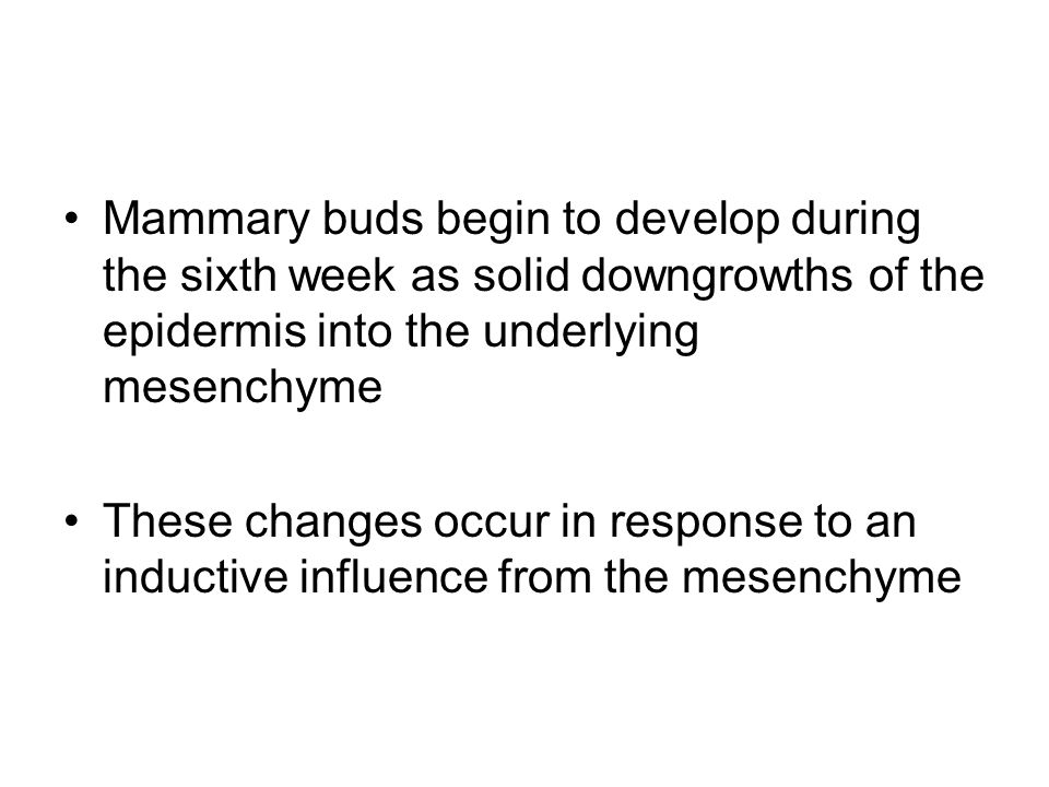 Mammary buds begin to develop during the sixth week as solid downgrowths of the epidermis into the underlying mesenchyme