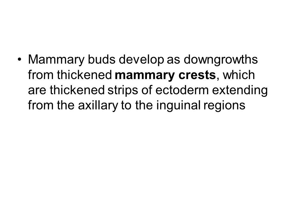 Mammary buds develop as downgrowths from thickened mammary crests, which are thickened strips of ectoderm extending from the axillary to the inguinal regions