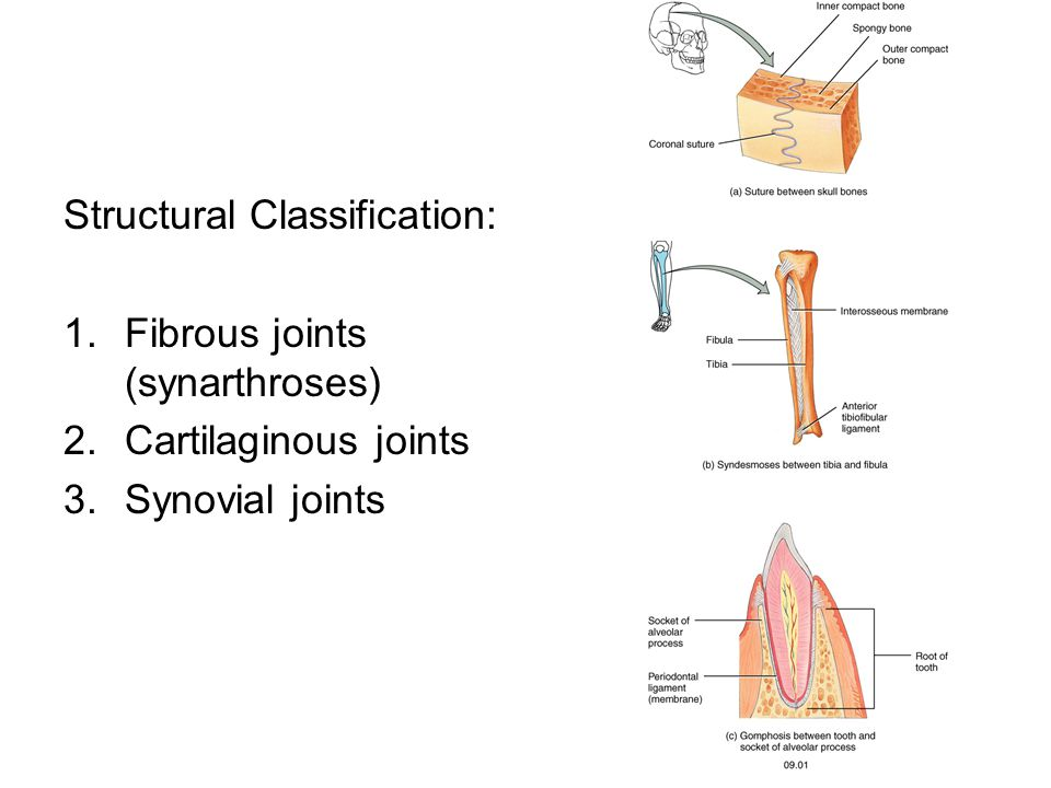 Structural Classification: