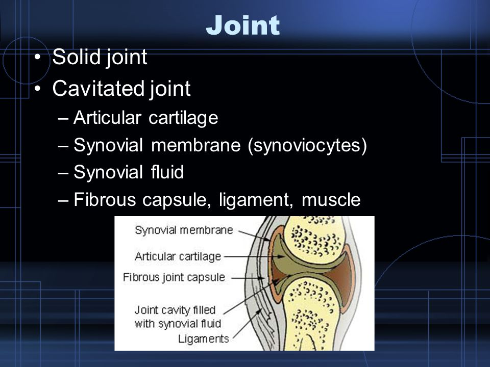 Joint Solid joint Cavitated joint Articular cartilage