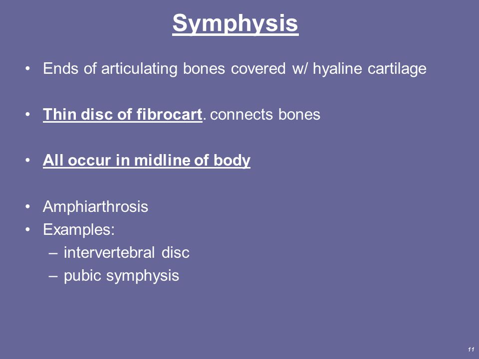 Symphysis Ends of articulating bones covered w/ hyaline cartilage