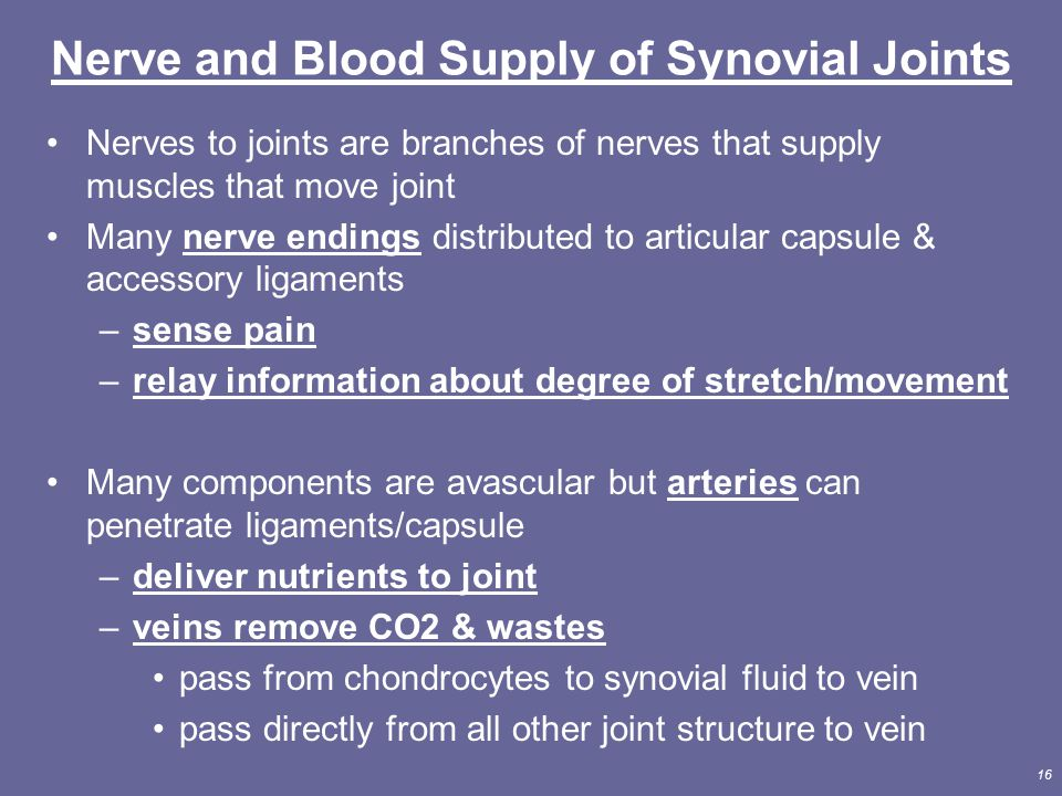 Nerve and Blood Supply of Synovial Joints