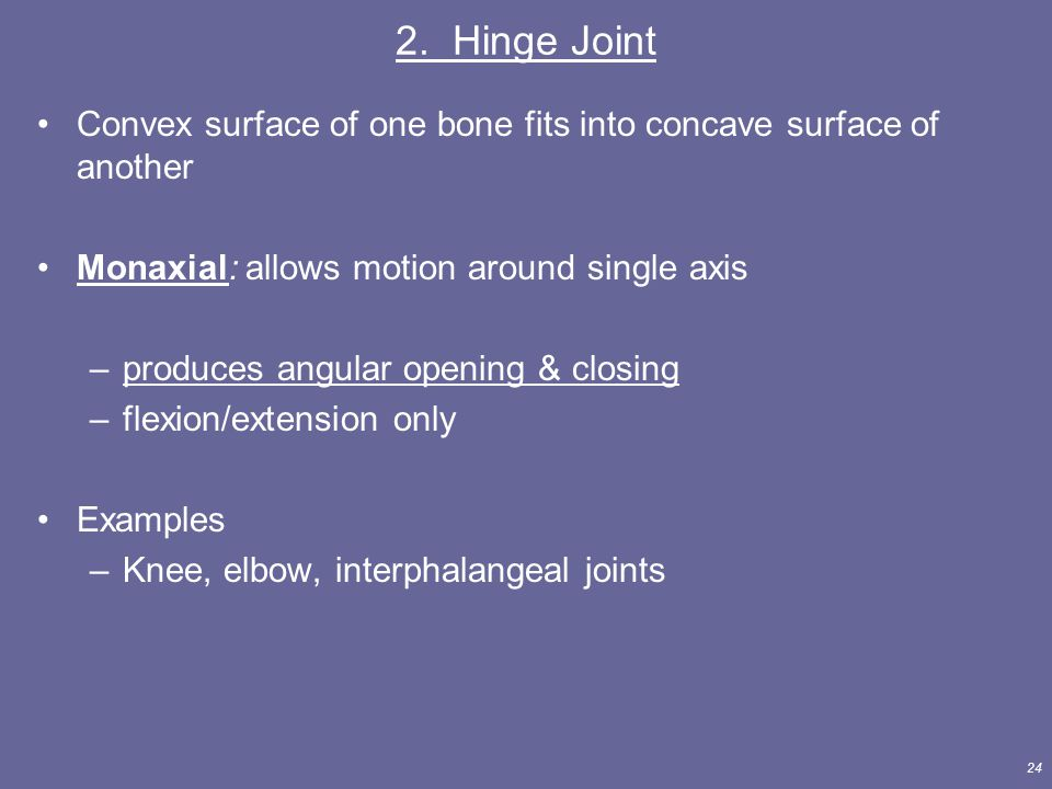 2. Hinge Joint Convex surface of one bone fits into concave surface of another. Monaxial: allows motion around single axis.