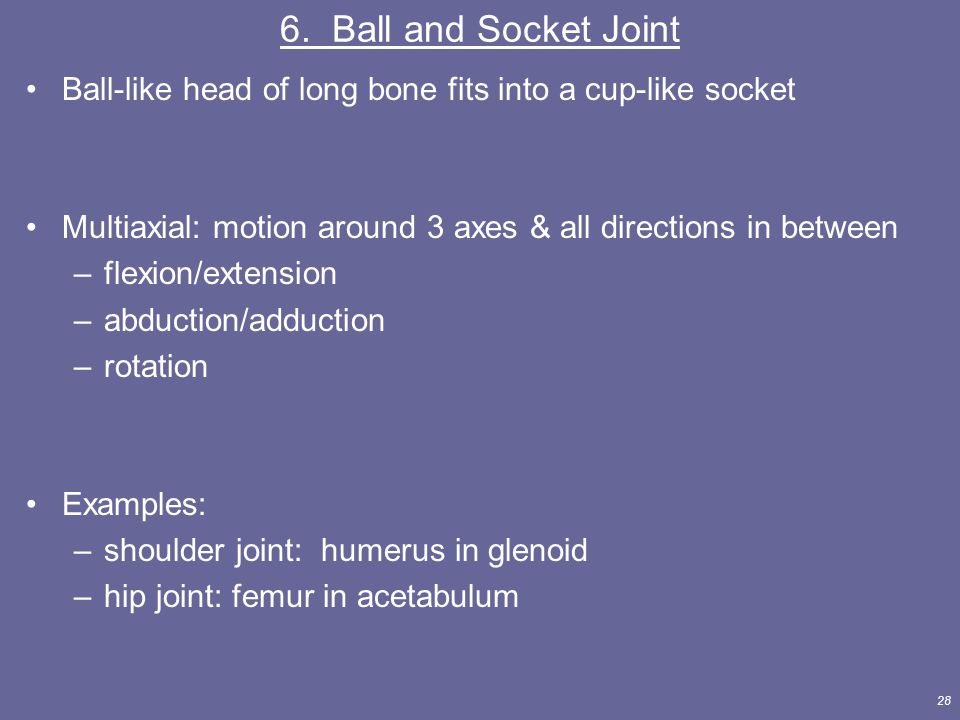6. Ball and Socket Joint Ball-like head of long bone fits into a cup-like socket. Multiaxial: motion around 3 axes & all directions in between.