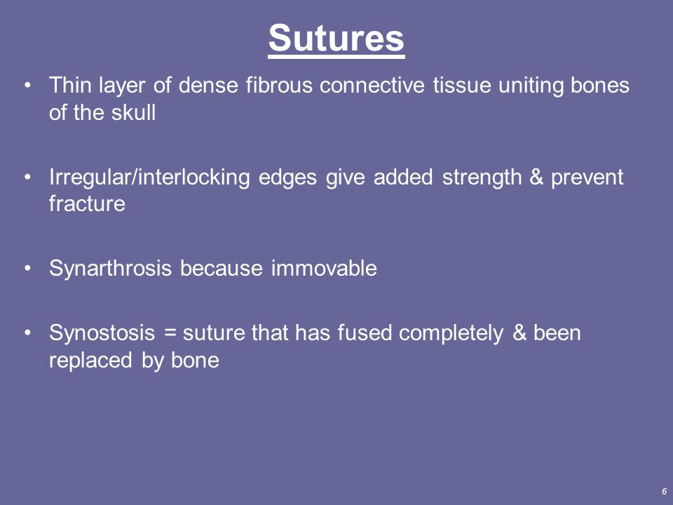 Sutures Thin layer of dense fibrous connective tissue uniting bones of the skull.