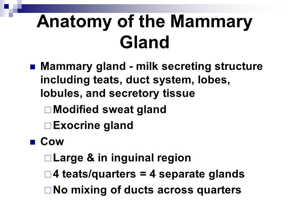 Anatomy of the Mammary Gland