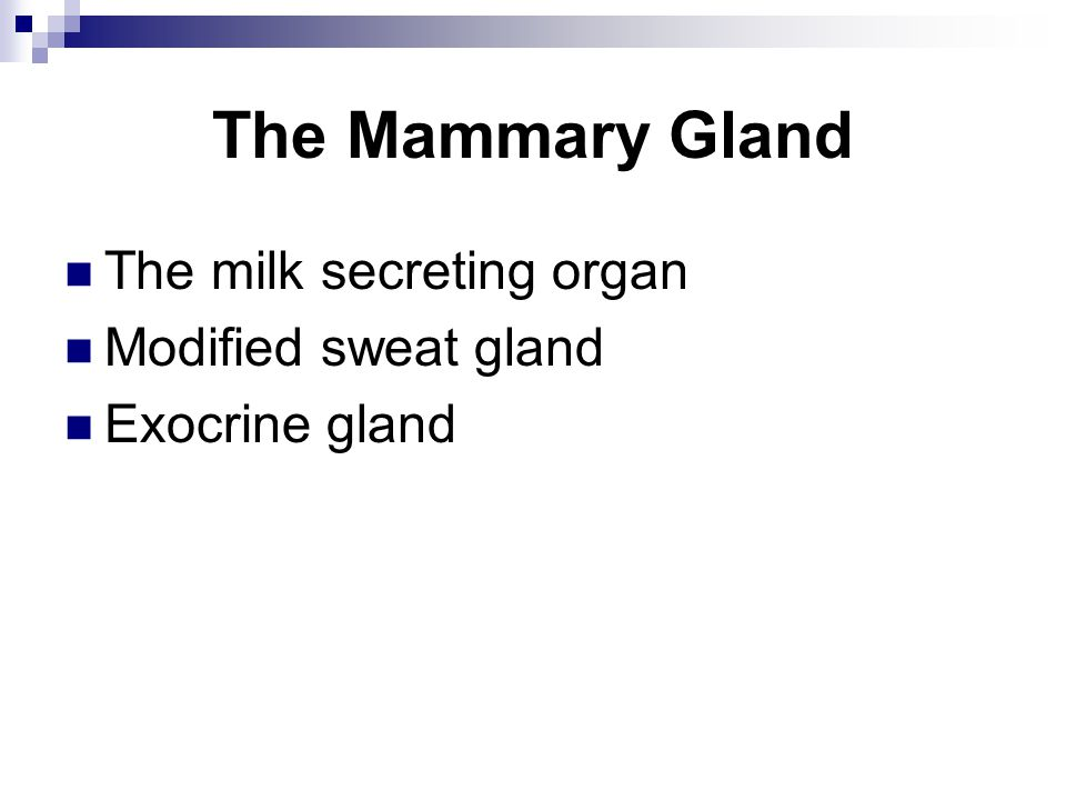 The Mammary Gland The milk secreting organ Modified sweat gland