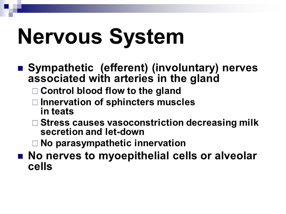 Nervous System Sympathetic (efferent) (involuntary) nerves associated with arteries in the gland. Control blood flow to the gland.