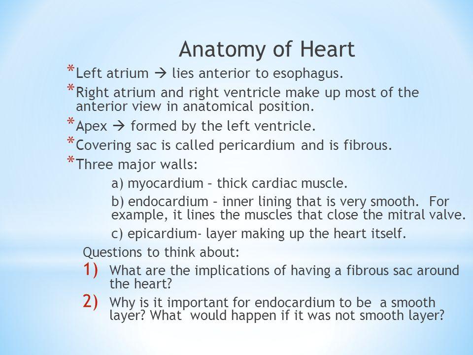 Anatomy of Heart Left atrium  lies anterior to esophagus.