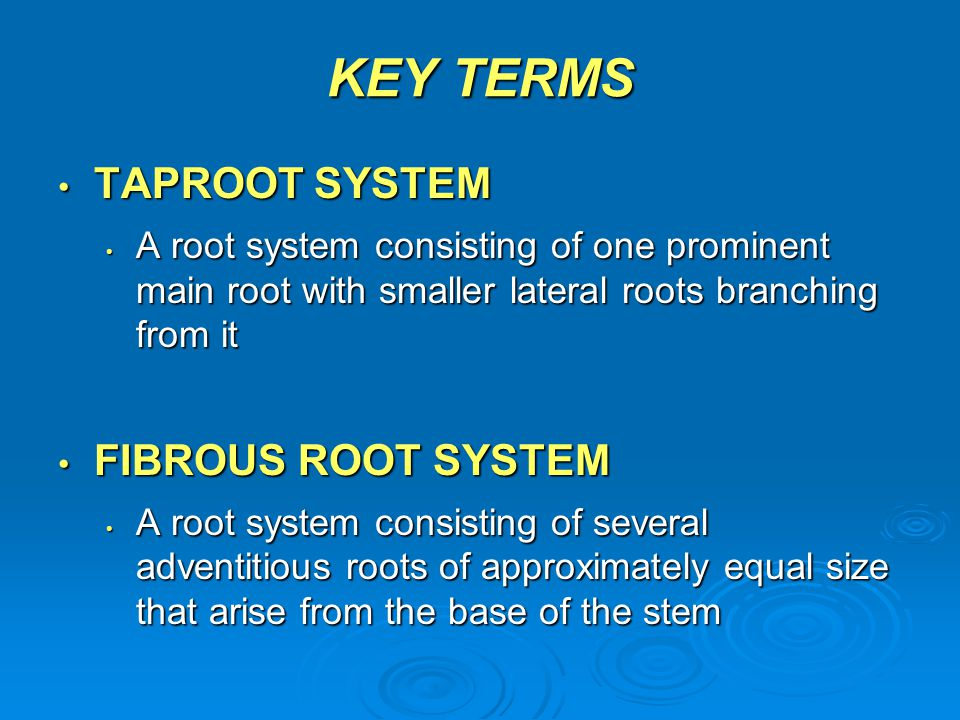 KEY TERMS TAPROOT SYSTEM FIBROUS ROOT SYSTEM