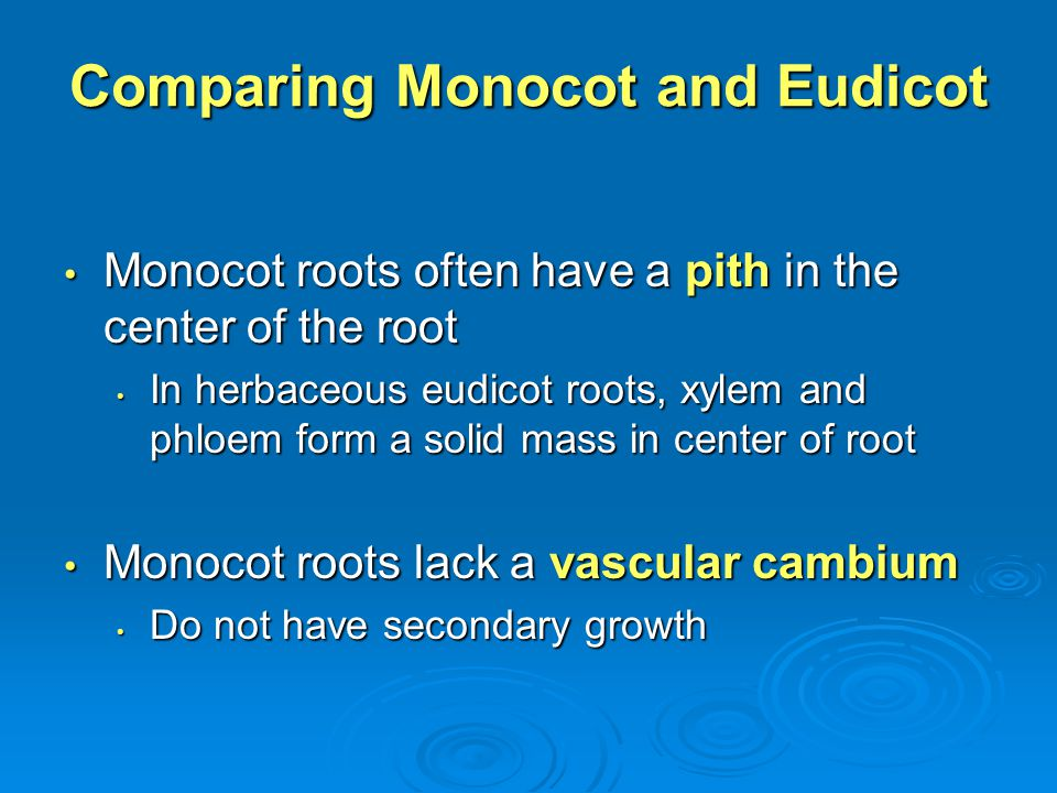 Comparing Monocot and Eudicot