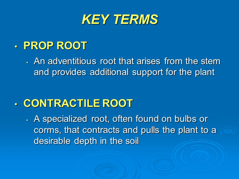 KEY TERMS PROP ROOT CONTRACTILE ROOT