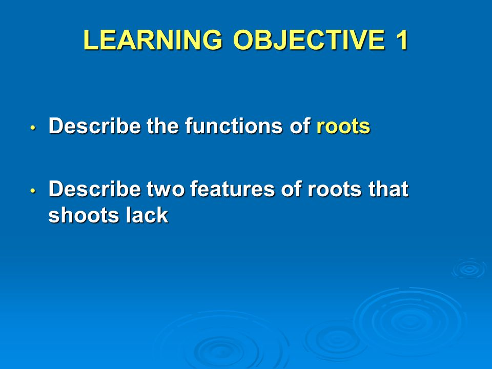 LEARNING OBJECTIVE 1 Describe the functions of roots