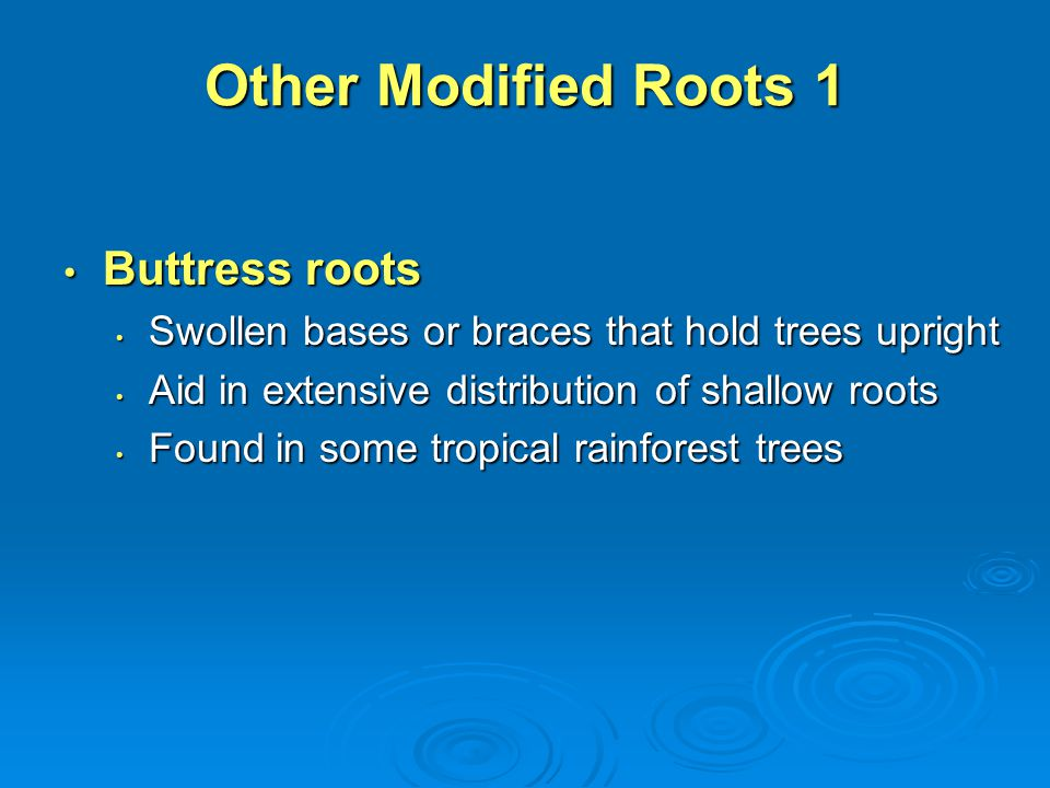 Other Modified Roots 1 Buttress roots