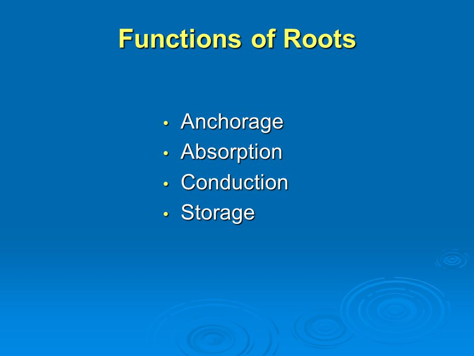Functions of Roots Anchorage Absorption Conduction Storage