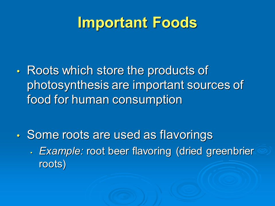 Important Foods Roots which store the products of photosynthesis are important sources of food for human consumption.