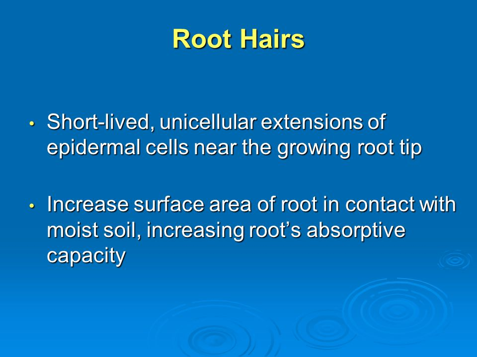 Root Hairs Short-lived, unicellular extensions of epidermal cells near the growing root tip.