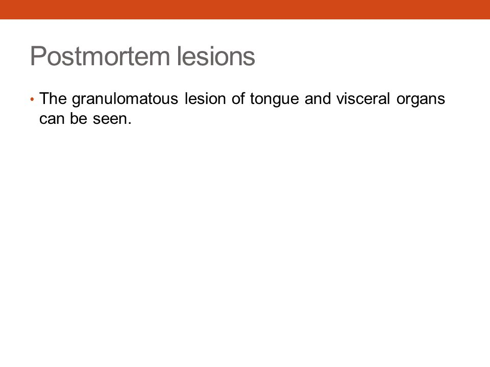 Postmortem lesions The granulomatous lesion of tongue and visceral organs can be seen.